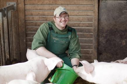 Schweinefütterung